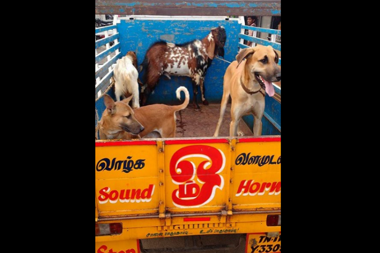Activists rescue animals from a circus in Tamil Nadu
