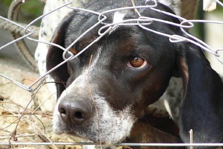 Dog putting its face through a wired fence