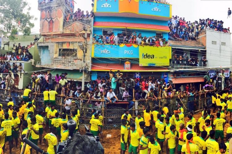 Thousands gather at Avaniyapuram to watch jallikattu doctors keep close watch on bulls