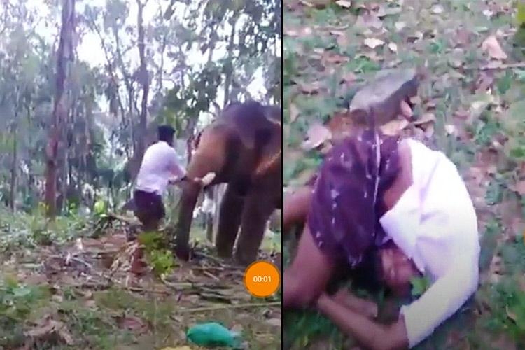 Watch Kerala man tries Baahubali stunt gets punched in the gut by elephant
