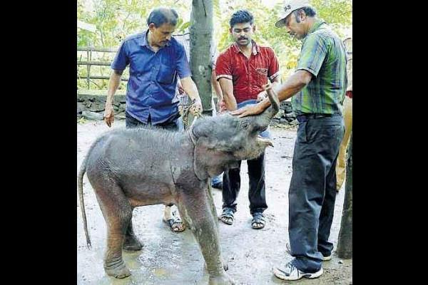 Reunite captured baby elephant with mother petition asks Forest department