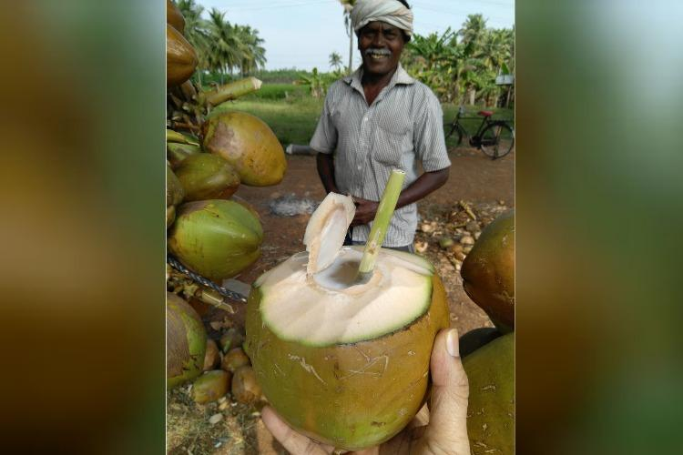 No plastic straws No problem TN tender coconut sellers find ingenious replacements