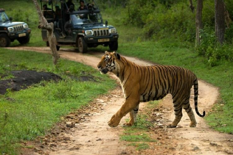 Ktaka govt rejects Centres proposal for elevated corridor in Bandipur Tiger Reserve