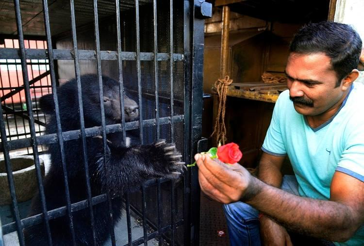 Kohima and Dimapur come to Kerala Zoo gets two Asiatic bears from North-East
