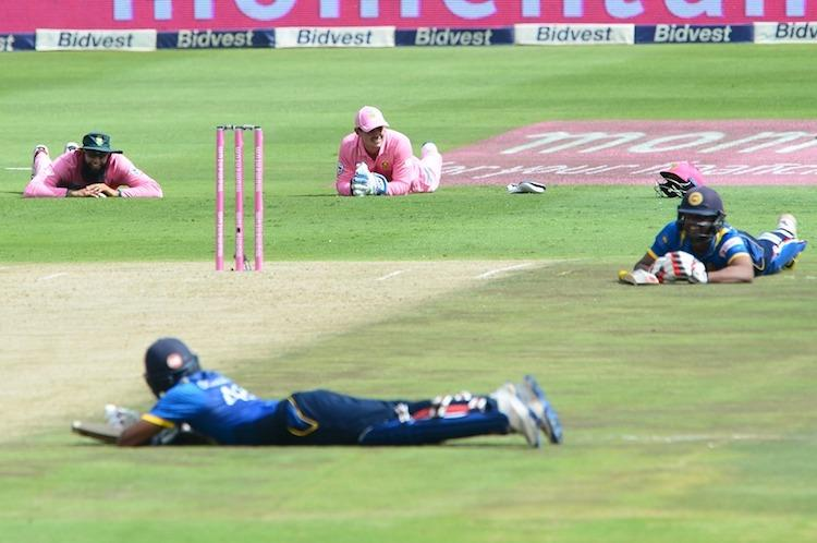 Comic relief for spectators as bees force players to hit the ground in SL vs SA match