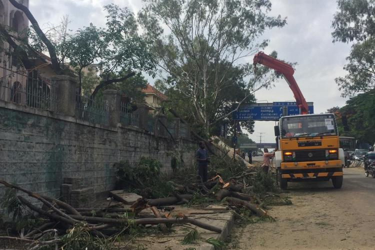 Despite court directive BBMP allows trees to be chopped for metro construction