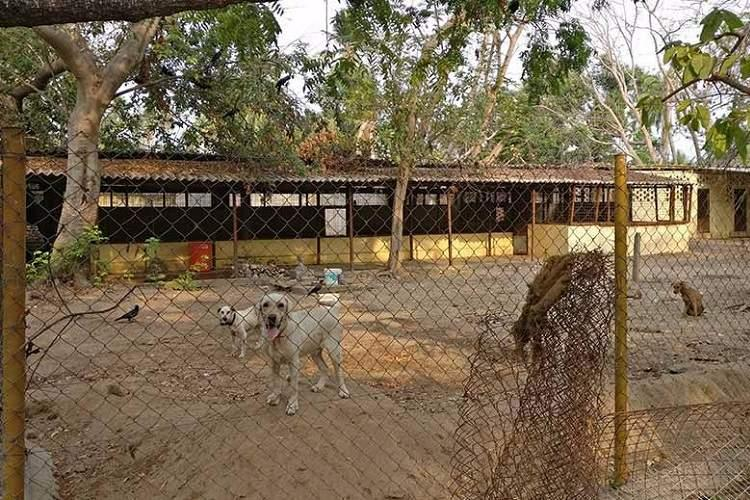 Hit by floods Cyclone Vardah this Chennai animal shelter needs a revamp and you can help
