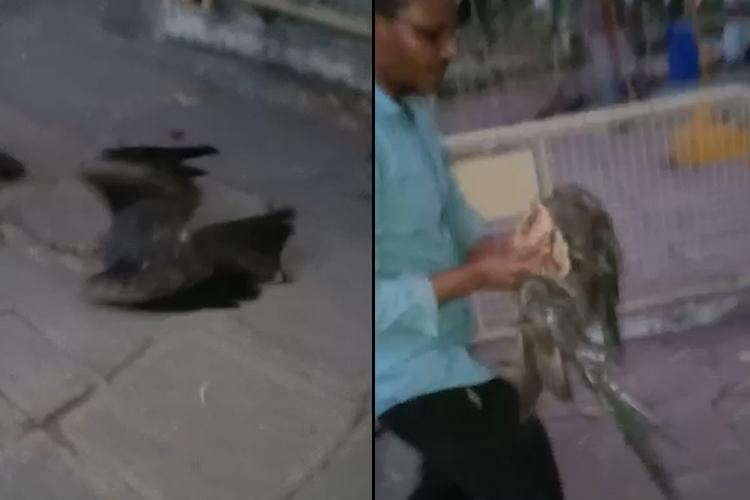 Video Hyd residents rescue bird entangled in manja for 5 days