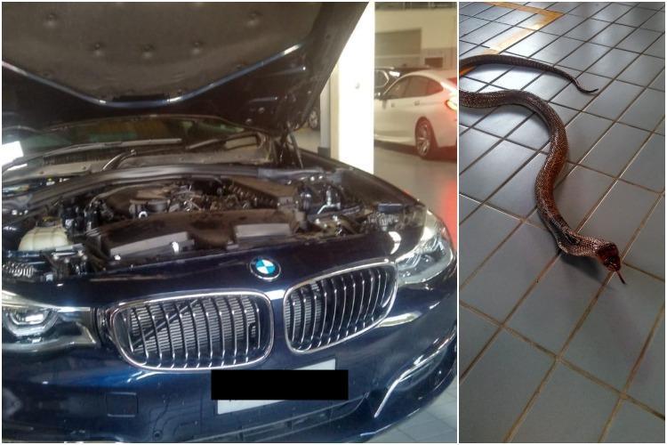 Watch 6-foot cobra sneaks into BMW TN businessmen spooked
