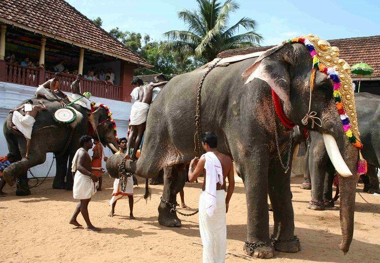 10 elephants dead and Kerala Forest Dept finally wake up to rules Admit laxity