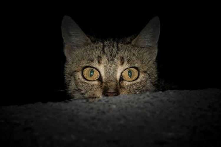 How do animals see in the dark