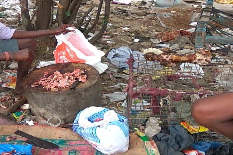 Cat meat trade busted in Chennai 16 cats rescued