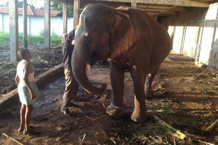 It took the death of one elephant from a zoo to save the other jumbos