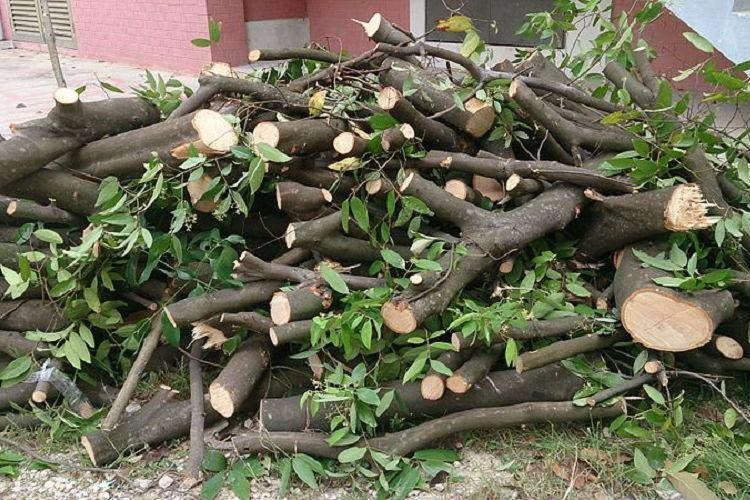 Hyd HC frowns on tree felling in state demands report on replanting by Dec 17