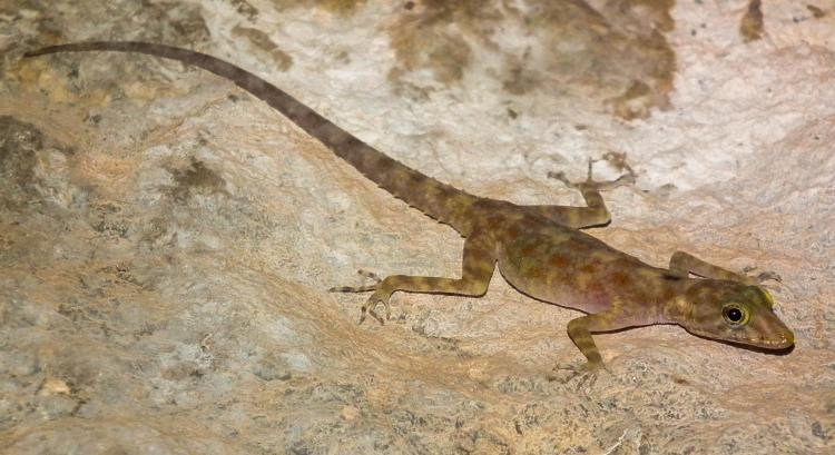 A biological treasure discovered amid the ruins of Hampi