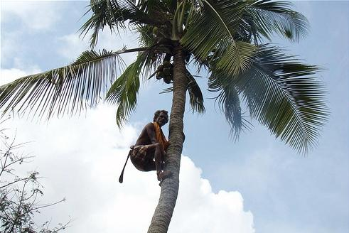 Blind coconut tree climber bed-ridden after fall
