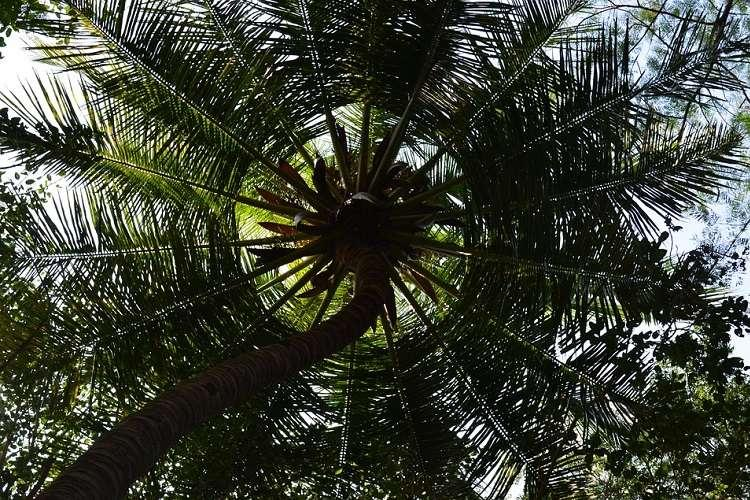Coconut tree climbing machine and 4 more innovative products from Kerala startups