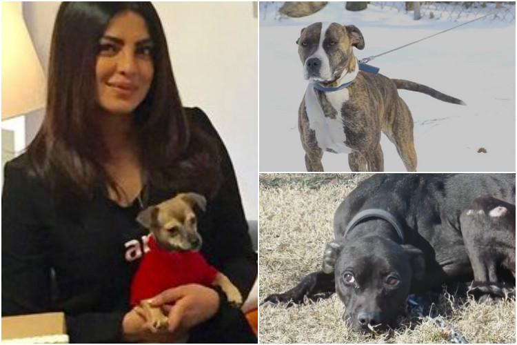 Watch Priyanka Chopra Tom Hardy lend voice to neglected dogs in heart wrenching video