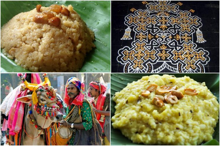 Tales food and agriculture How Sankranthi is celebrated across India