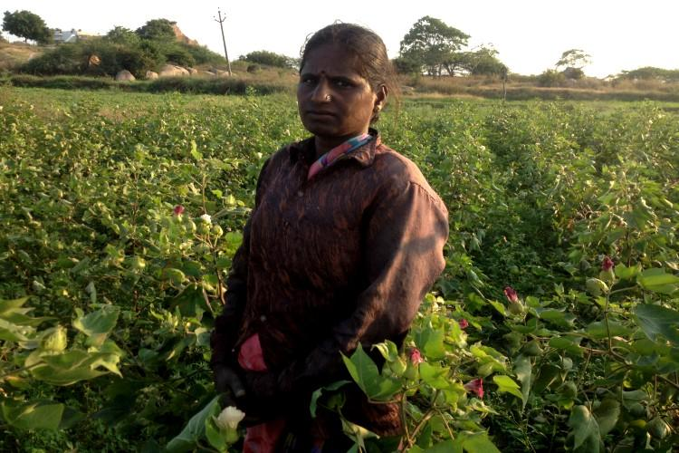 Ground report How cotton cultivation in Gadwal is affecting childrens education