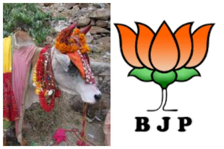 Cow gives milk not votes - How BJP is being trolled online for losing Bihar
