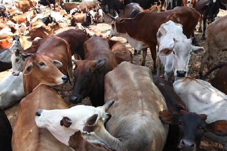 Govt plans to set up cow sanctuaries as part of Project Cow Union Minister Hansraj Ahir