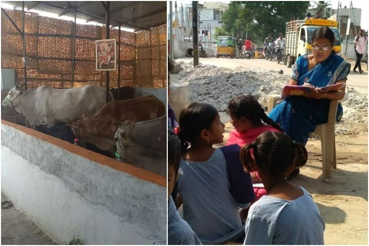 Cows more important than education School turns into gaushala in Hyderabad