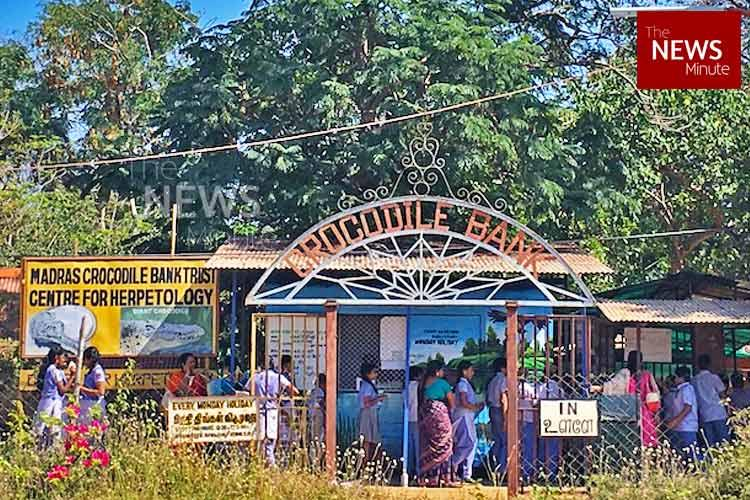 Croc on 42 years later Madras Crocodile Bank is an ocean of cool reptiles