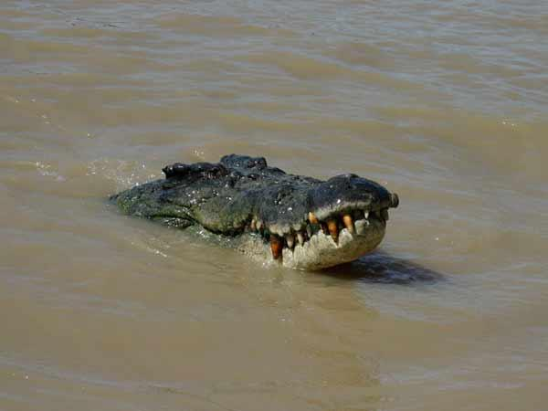 Rising human-croc conflict Andamans wants crocodiles delisted from Wildlife Act