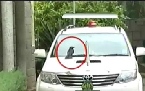 Breaking news Crow sits on Siddaramaiahs car Kannada channels go kaa-kaa