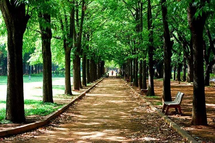Bengalurus Cubbon Park to get air purifiers to tackle rising pollution
