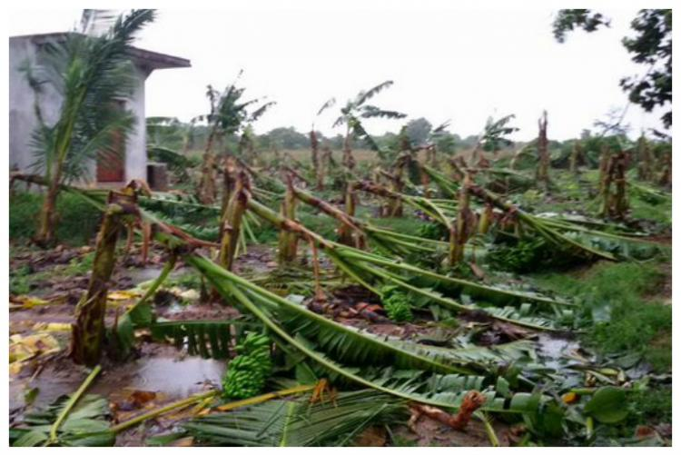 Cuddalore limps back to normalcy TN rains death toll rises to 50