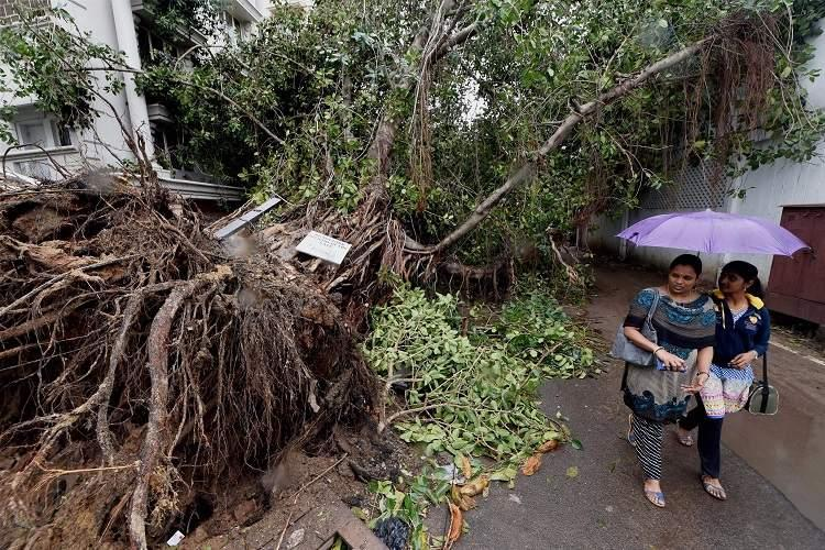 Number of trees Cyclone Vardah uprooted in Chennai 17000