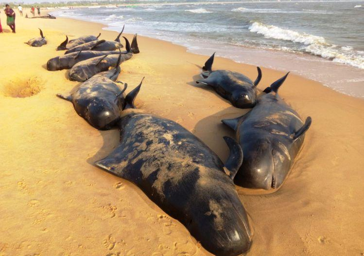 5 videos you have to watch on the whales which washed up on the shores of Tamil Nadu
