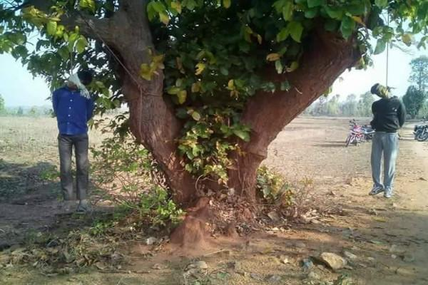 Two Muslim cattle traders beaten up hanged to death from a tree in Ranchi