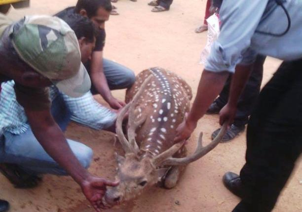 Deer carcasses increase are poachers running amok at Hyderabad university campus