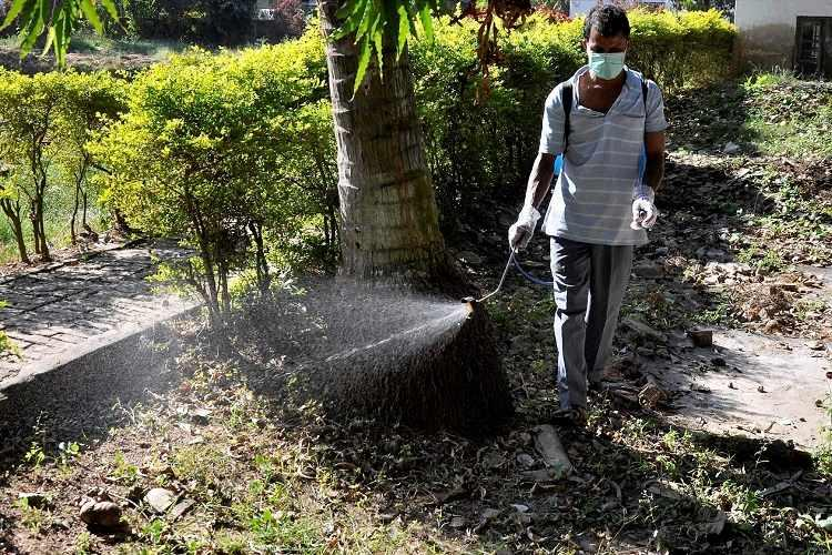 Dengue cases in India up by over 11500 from last year south Indian states worst hit