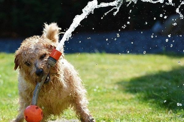 Beating the heat for your pet Five things you should follow as a pet-parent