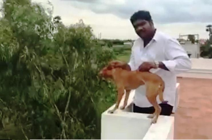 Man seen in video throwing dog off terrace was a medical student from Chennai