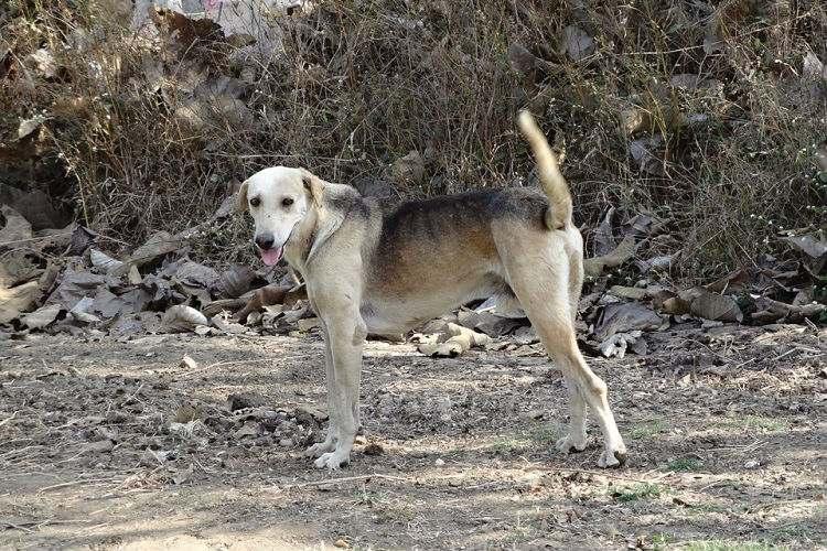 Bengaluru NGOs shut shop on stray dog sterilisation thanks to BBMPs payment delays