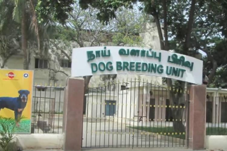 Madras HC orders TN govt to close 35-year old dog breeding unit