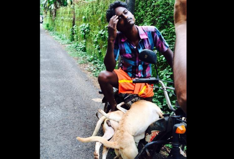 Police registers case over mass dog killing in Kannur