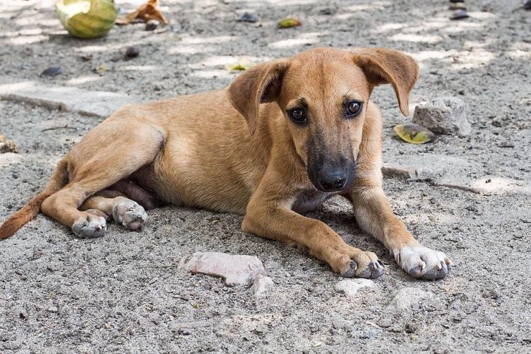 Dog beaten to death in Chennais Anna Nagar two arrested