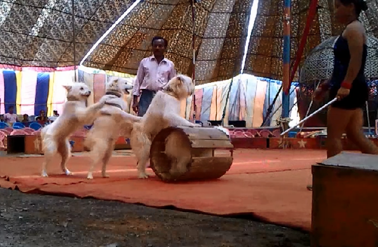 No more torn nostrils or bad living conditions Circus animals given new life