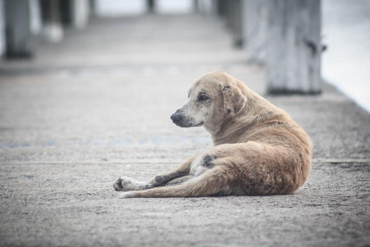 Chennai man assaults dog agrees to volunteer with Blue Cross as punishment