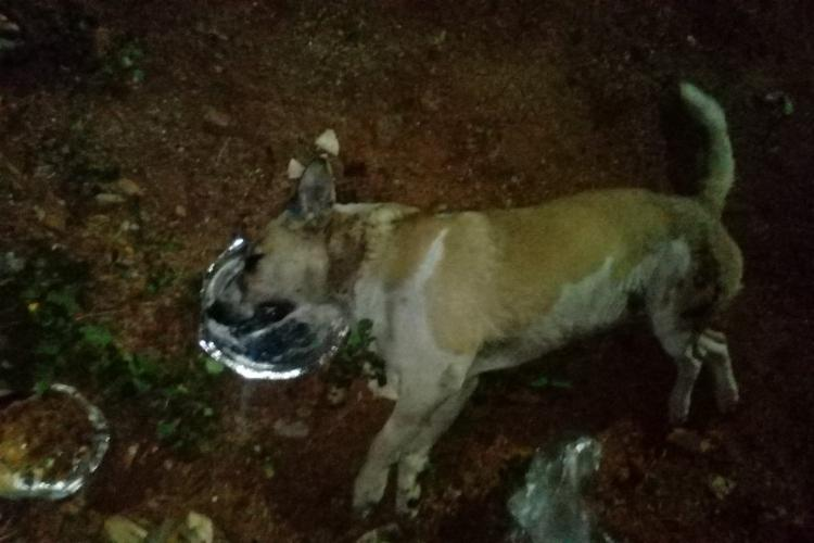 50 stray dogs allegedly poisoned and killed by township in Hyderabad