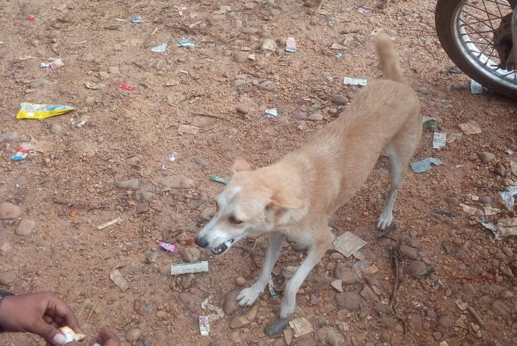 Three men in Karnataka booked for tying firecrackers to stray dogs tail on Deepavali