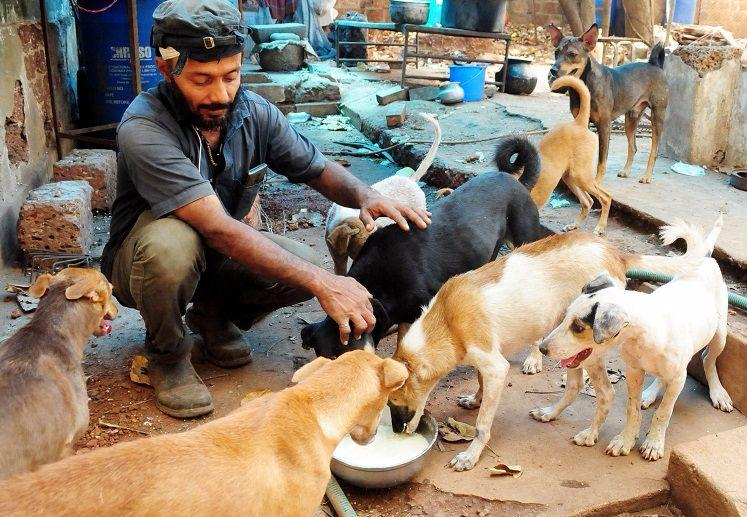 For housing 40 stray dogs this Kerala man faces protests from local residents