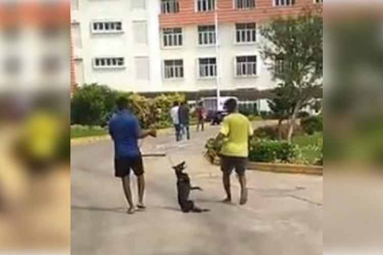 Video Dog strangled and dragged out from VITs Chennai campus triggers horror