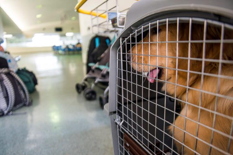 Kerala International airports dont allow pets to be flown in NRI-pet owners protest